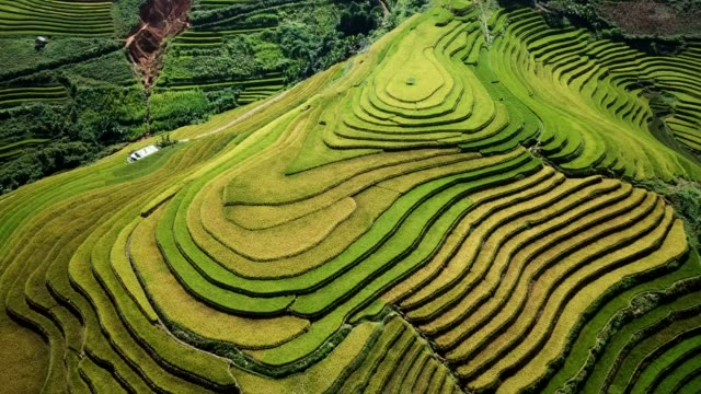terraced paddy fields  farm on hilly or mountainous terrain, normally farming in east, south, and southeast asia - bali stock videos & royalty-free footage