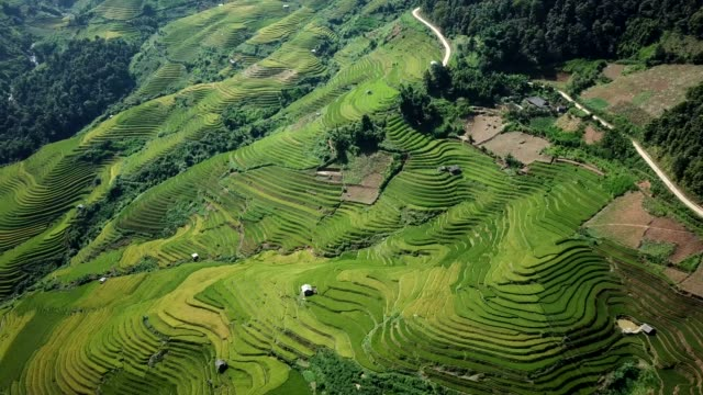 terraced paddy fields  farm on hilly or mountainous terrain, normally farming in east, south, and southeast asia - south vietnam stock videos & royalty-free footage