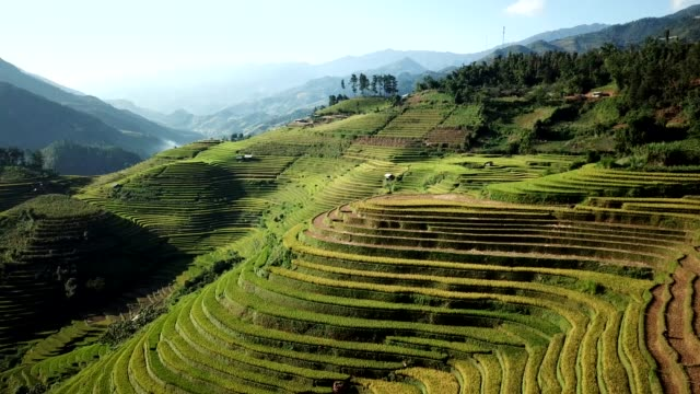 vídeos de stock e filmes b-roll de terraced paddy fields  farm on hilly or mountainous terrain, normally farming in east, south, and southeast asia - camboja