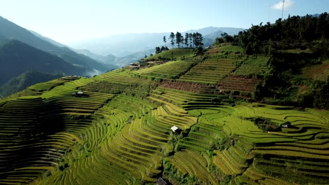 terraced paddy fields  farm on hilly or mountainous terrain, normally farming in east, south, and southeast asia - rice paddy stock videos & royalty-free footage