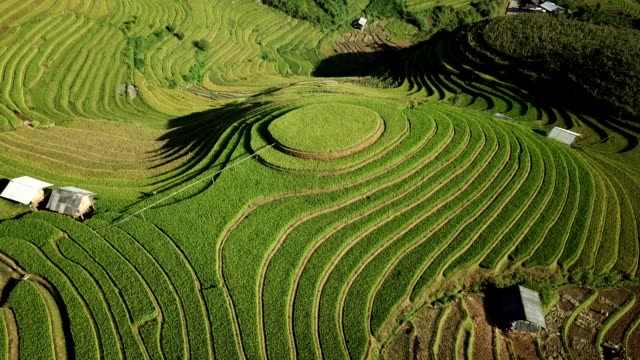 terraced paddy fields  farm on hilly or mountainous terrain, normally farming in east, south, and southeast asia - rice terrace stock videos and b-roll footage