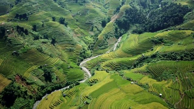 vídeos y material grabado en eventos de stock de finca bancales de arroz en terreno montañoso o montañoso, normalmente la agricultura en oriente, al sur y asia sur-oriental - campo de arroz