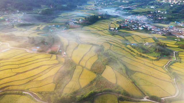 terraced paddy fields / ulju-gun, ulsan, south korea - 農家の家点の映像素材/bロール