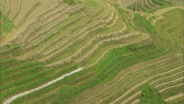 ms ha terraced rice field, guilin, guangxi zhuang autonomous region, china - guangxi zhuang autonomous region china stock videos & royalty-free footage