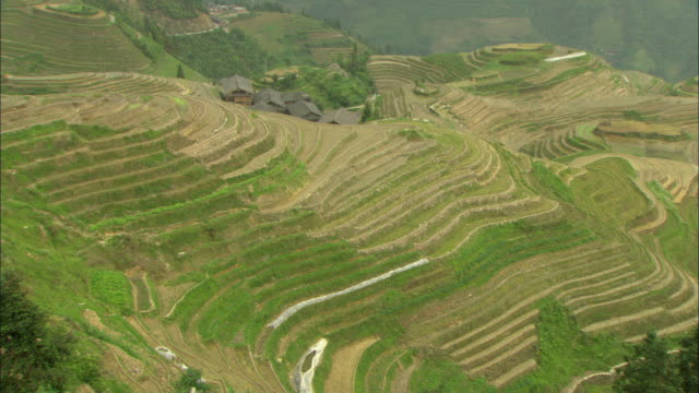 ws ha terraced rice field, guilin, guangxi zhuang autonomous region, china - guangxi zhuang autonomous region china stock videos & royalty-free footage