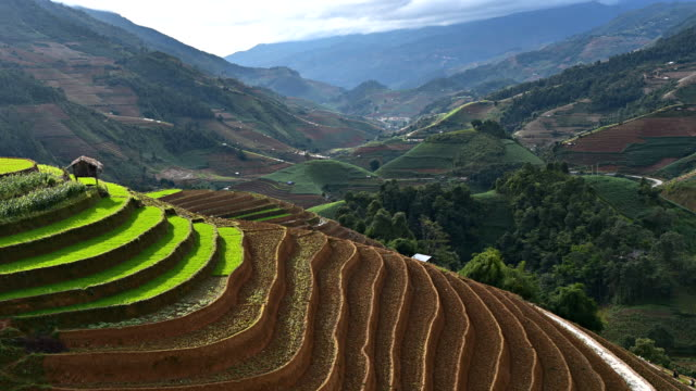 terraced rice field in mu chang chai, vietnam - paddy field stock videos & royalty-free footage