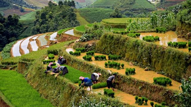 stockvideo's en b-roll-footage met terraced rice field in mu chang chai, vietnam - vietnam