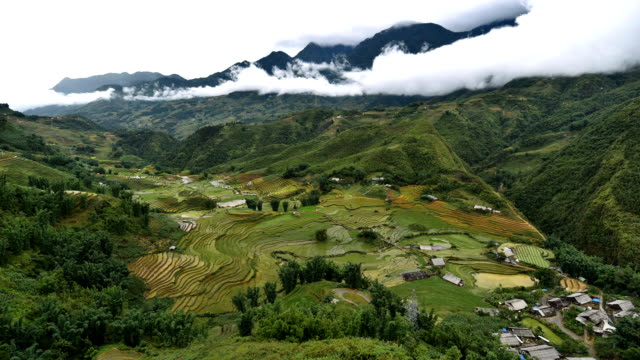 terraced rice field in sapa, vietnam - asian tribal culture stock videos and b-roll footage