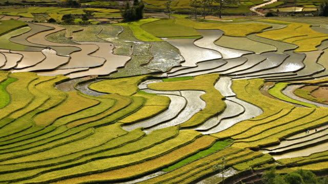 terraced rice field in tule village - sa pa stock videos and b-roll footage