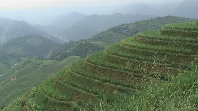 WS Terraced rice field, Longsheng, Guangxi, China