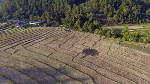 Terrasserade risfält på berg, Chiang Mai-provinsen, Thailand, Flygfoto