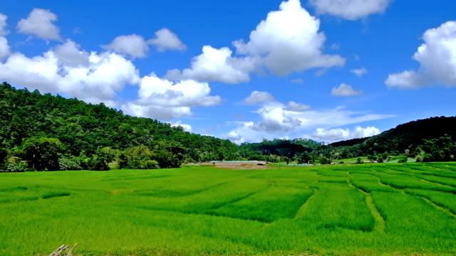 タイの北部チェンマイ県、山、pa ピンポン ピアン村の棚田 - 農村の風景点の映像素材/bロール