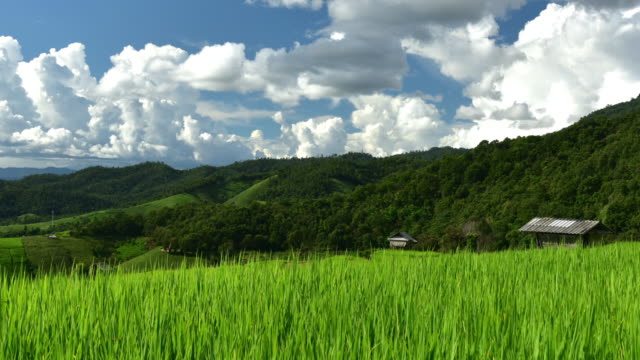 Terrassierte Reisfelder auf Berg, Pa Pong Piang Dorf, Provinz Chiang Mai, Nordthailand