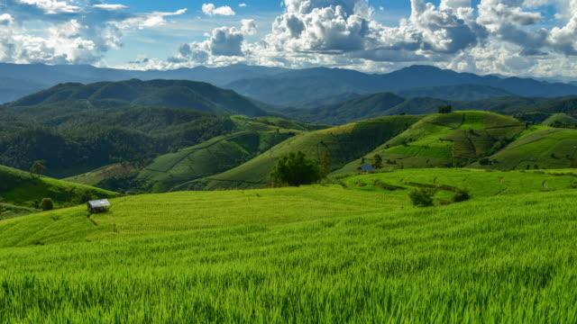 タイの北部チェンマイ県、山、Pa ピンポン ピアン村の棚田