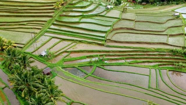 Terrasvormige rijstvelden, Bali, Indonesië
