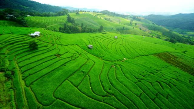 Terraced rice paddy field