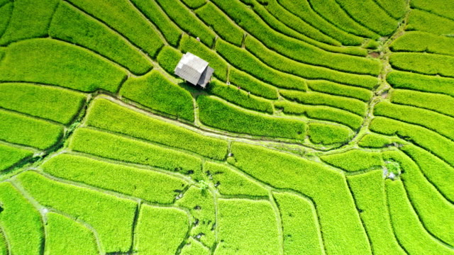 Terraced rice paddy field
