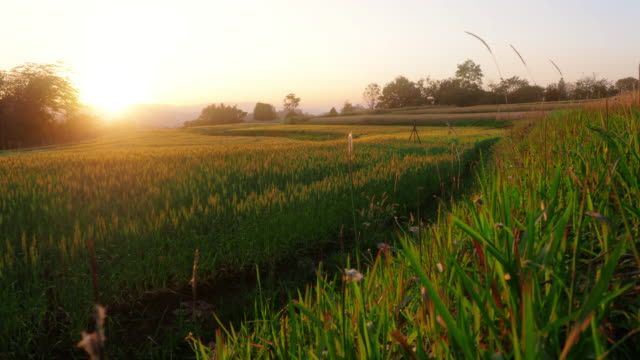 terraced rice paddy field - paddy field stock videos & royalty-free footage