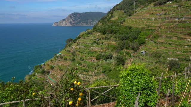 Terraced Vineyards above the Sea near Manarola, Italian Riviera, Cinque Terre, Liguria, Italy