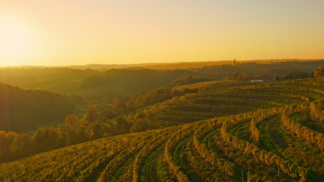 AERIAL Terraced vineyards in Prekmurje