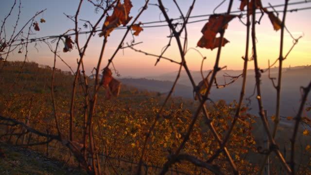 terraced vineyards in the sunrise - prekmurje stock videos & royalty-free footage