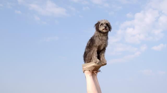 vidéos et rushes de slo mo terrier balancing on woman's feet on beach - femme soumise