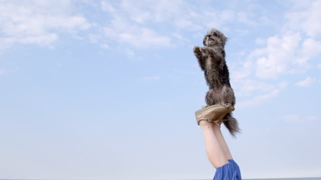 SLO MO Terrier balancing with raised paws on woman's feet on beach