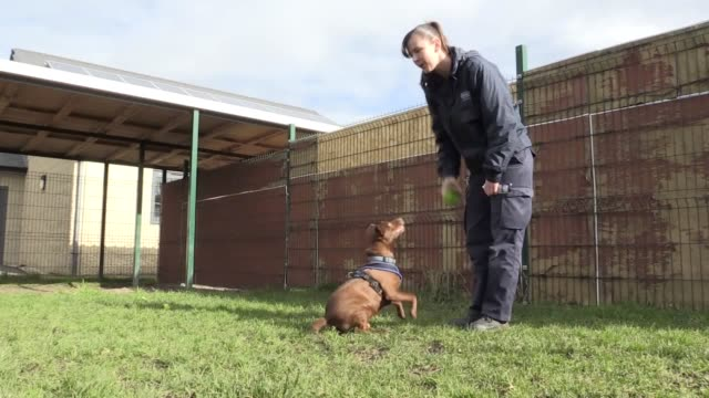 terrier cross diefer has been dubbed 'britain's loneliest dog' after spending 438 days and counting awaiting adoption at an rspca shelter in... - keypad stock videos & royalty-free footage