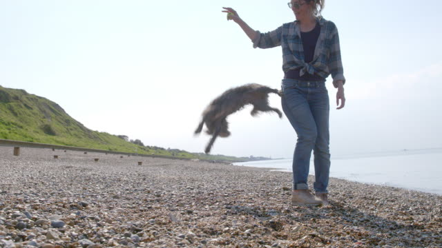 vídeos de stock, filmes e b-roll de slo mo terrier doing jumping trick with owner on beach - agilidade