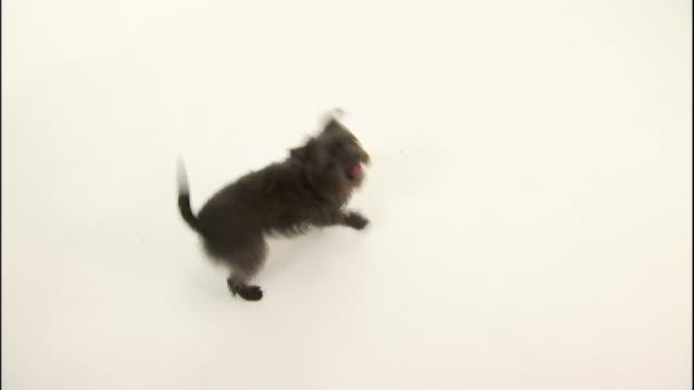 vídeos y material grabado en eventos de stock de a terrier jumps and wags its tail. - terrier