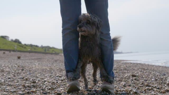 SLO MO terrier with paws on owner's feet walking on beach
