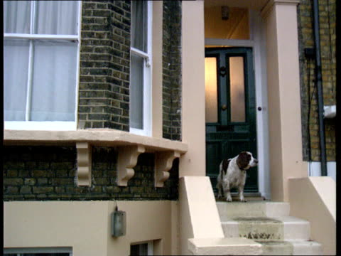stockvideo's en b-roll-footage met terry waite's homecoming england london blackheath young man coming out of terry waite's home pan rl lams young woman coming out of terry waites home... - terry waite
