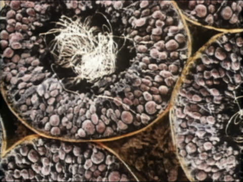1985 animation testicles manufacturing sperm cells - 染色体点の映像素材/bロール