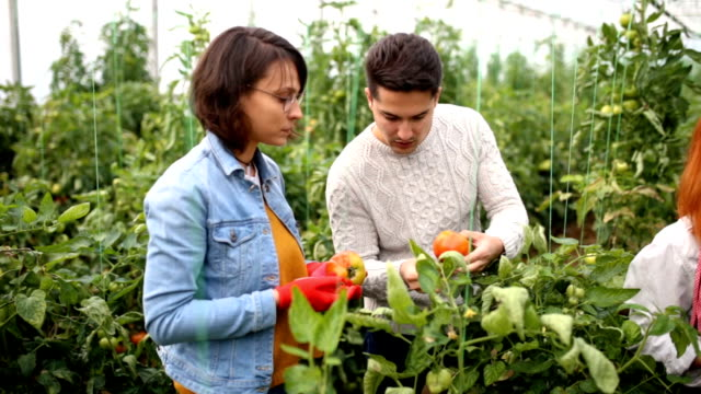 Testing Tomatoes For Ilness