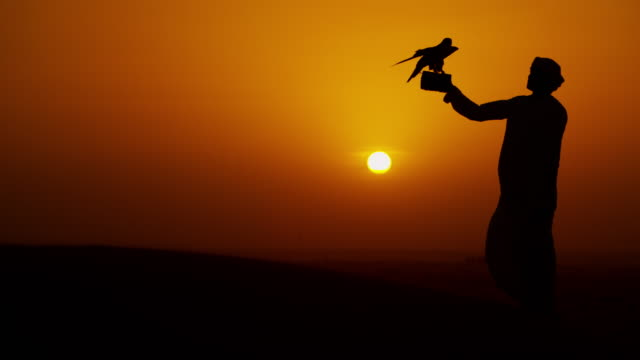 Tethered falcon on Arab owners glove sunset silhouette