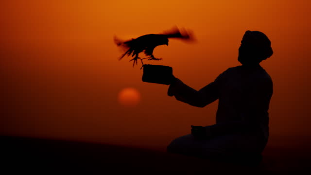 tethered falcon on arab owners glove sunset silhouette - oman stock-videos und b-roll-filmmaterial