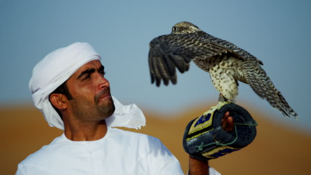 tethered falcon on glove of male arab owner - falcon bird stock videos & royalty-free footage