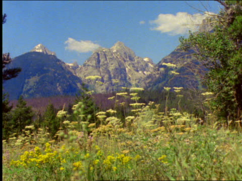 vídeos de stock, filmes e b-roll de teton mountains with wildflowers in foreground / grand teton national park, wyoming - 2001