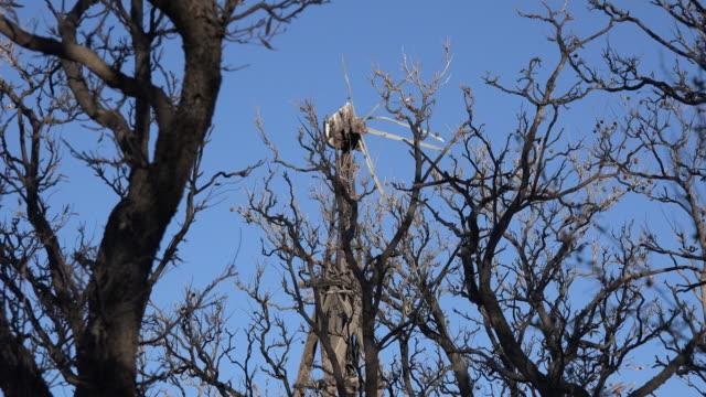 Texas Big Bend broken windmill through trees Sam Nail Ranch