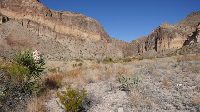 texas big bend burro mesa and blooming yucca on the side - yucca stock videos & royalty-free footage