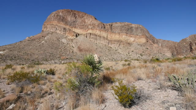 texas big bend burro mesa and blooming yucca - yucca stock videos & royalty-free footage