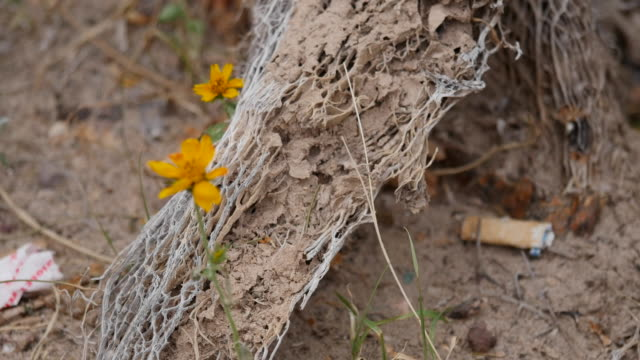 texas big bend flower and wood - soft focus stock videos & royalty-free footage