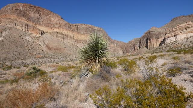 texas big bend mesa view pan - tropical bush stock videos and b-roll footage