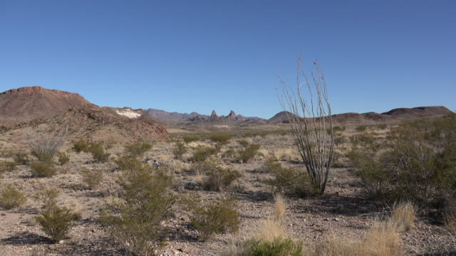 Texas Big Bend Mule Ears in distance with ocotillo