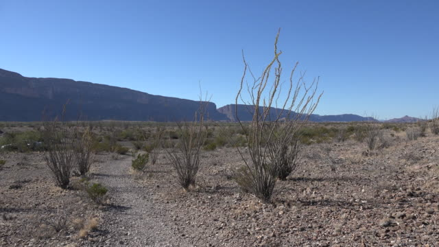texas big bend santa elena canyon zoom to canyon view through ocotillo - cactus stock videos & royalty-free footage