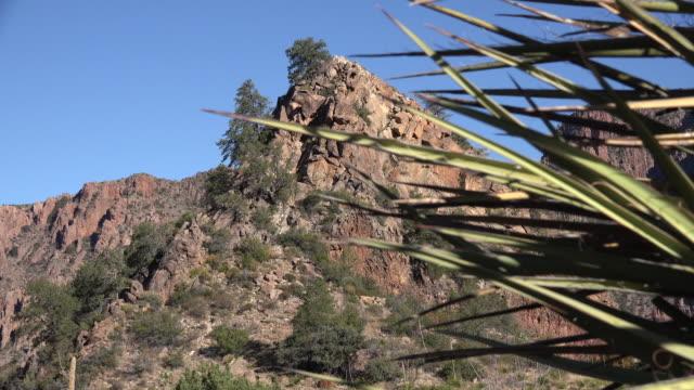 vídeos de stock, filmes e b-roll de texas big bend view with yucca zoom in - arbusto tropical