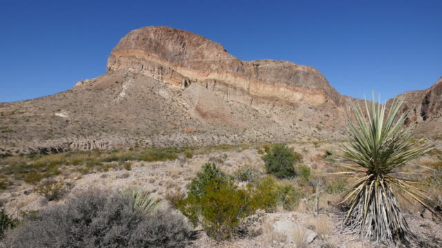 texas big bend yucca and mountain view - yucca stock videos & royalty-free footage