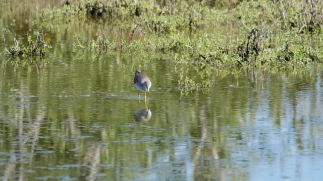 texas bird reflected in water - water bird stock videos & royalty-free footage