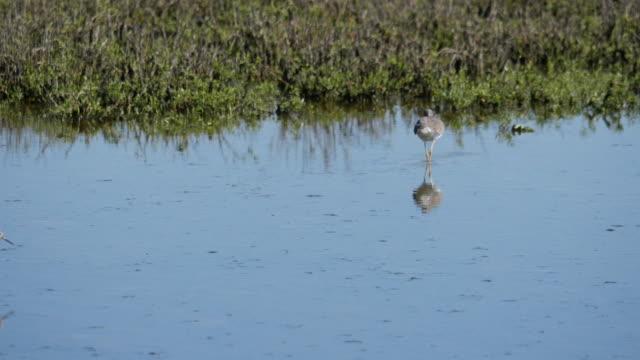 Texas birds feeding in shallow water