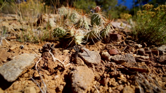 texas brown tarantula - animal crossing sign stock videos & royalty-free footage
